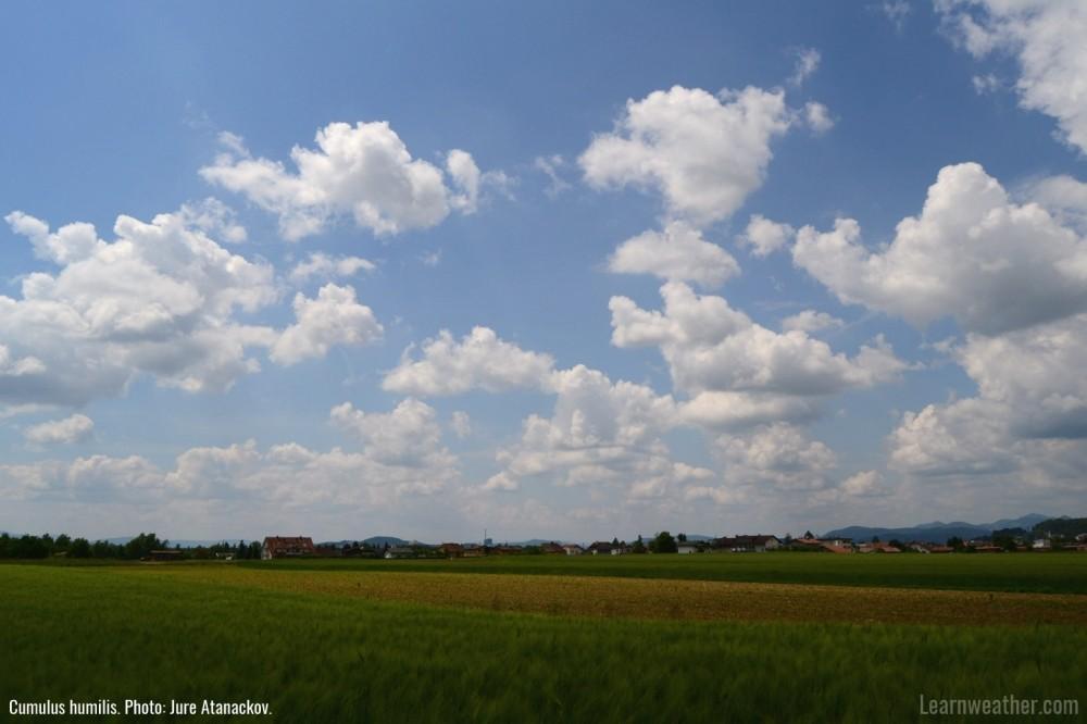 Cumulus humilis LW 1